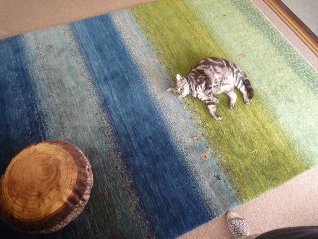 猫はギャッベで丸くなる特集