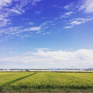 【イベント情報】5月のアートギャッベ200枚展