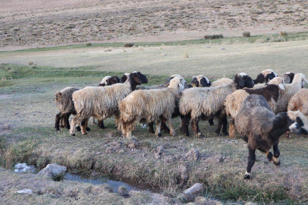 ウール絨毯の特徴【ギャッベの遊び毛】