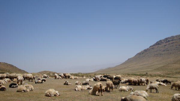 遊牧地風景写真
